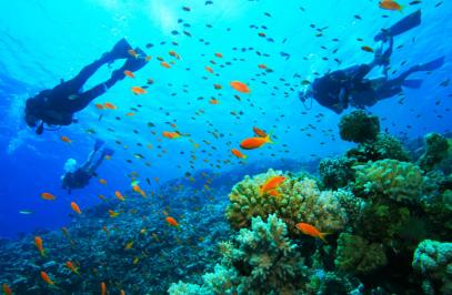 Dive Panama's Pacific Ocean: Sister Islands on the Bay of Panama